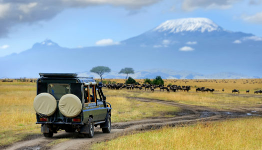 IVY Travels to Kenya: Experience the Journey of a Lifetime