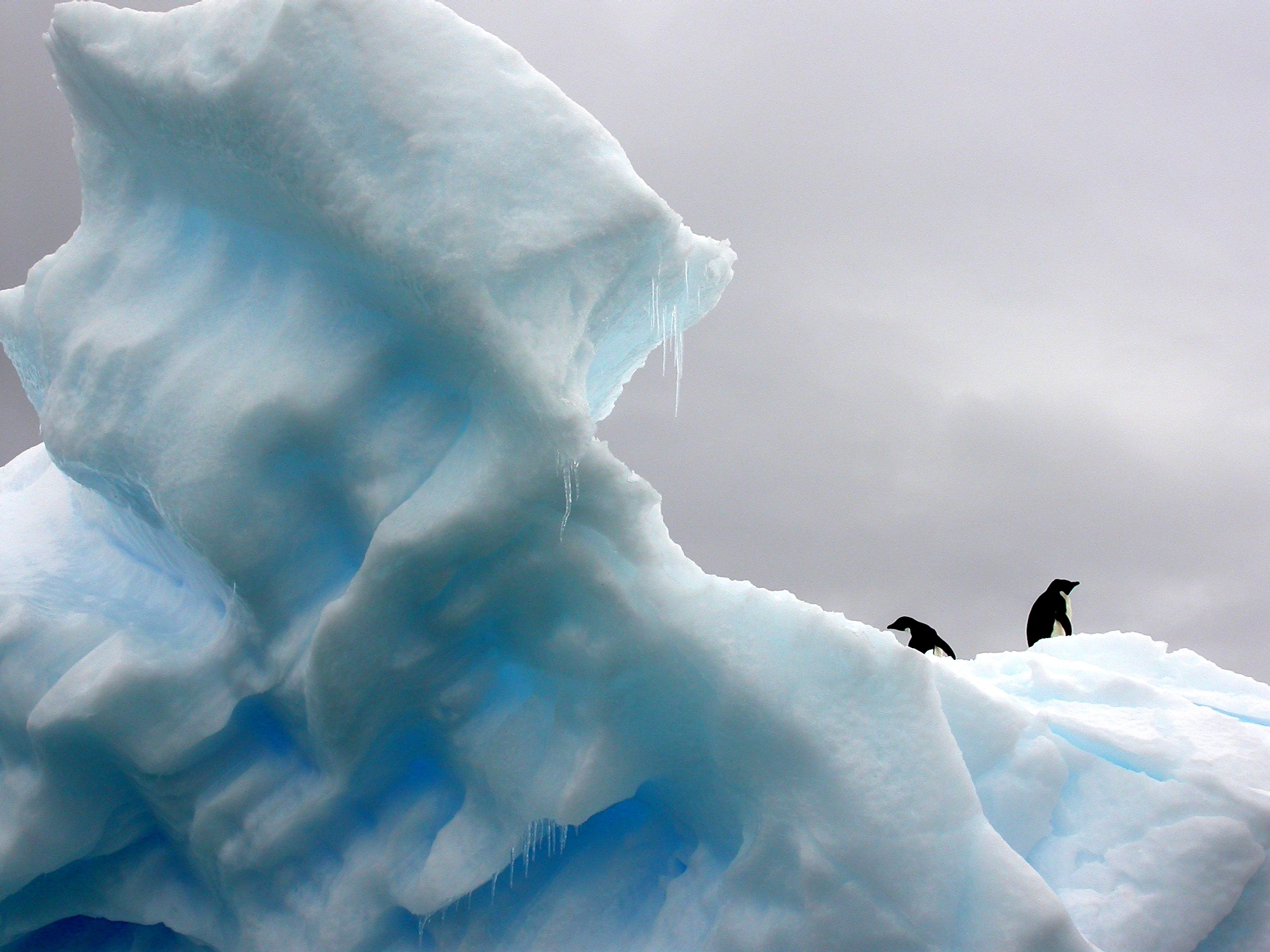 Journey To The Seventh Continent With IVY What To Pack How To - 12 things to see and do in antarctica